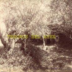 Fotografía antigua: ANTIGUA FOTOGRAFIA ALBUMINA ORIGINAL DEL FOTOGRAFO FRANCISCO ZAGALA, PAISAJE EN LA SECA, PONTEVEDRA,. Lote 38280847