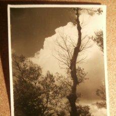 Fotografía antigua: ANTIGUA FOTOGRAFIA - 1951 -. Lote 43192803
