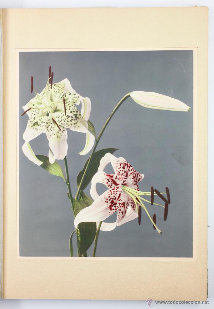 Fotografía antigua: JAPAN,1897-98, BRINKLEY, EDITION DE LUXE. Más de 200 albúminas y 9 collotipos. 9 álbumes. Ver fotos - Foto 10 - 44465154