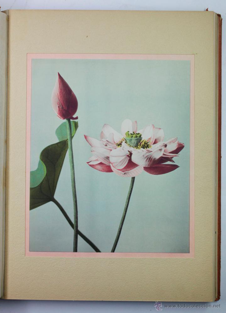 Fotografía antigua: JAPAN,1897-98, BRINKLEY, EDITION DE LUXE. Más de 200 albúminas y 9 collotipos. 9 álbumes. Ver fotos - Foto 32 - 44465154