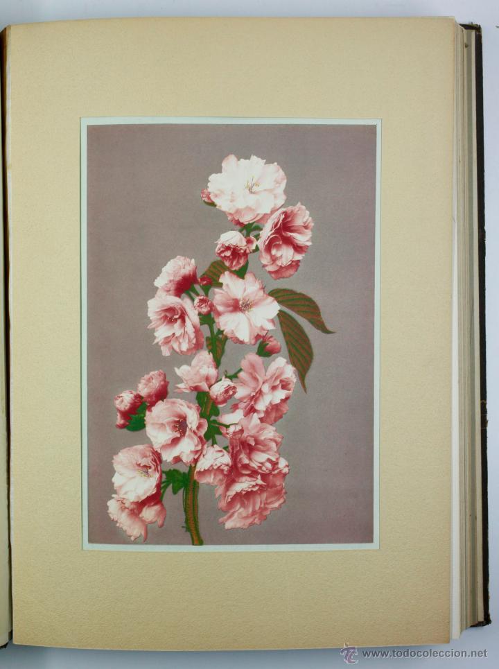 Fotografía antigua: JAPAN,1897-98, BRINKLEY, EDITION DE LUXE. Más de 200 albúminas y 9 collotipos. 9 álbumes. Ver fotos - Foto 45 - 44465154