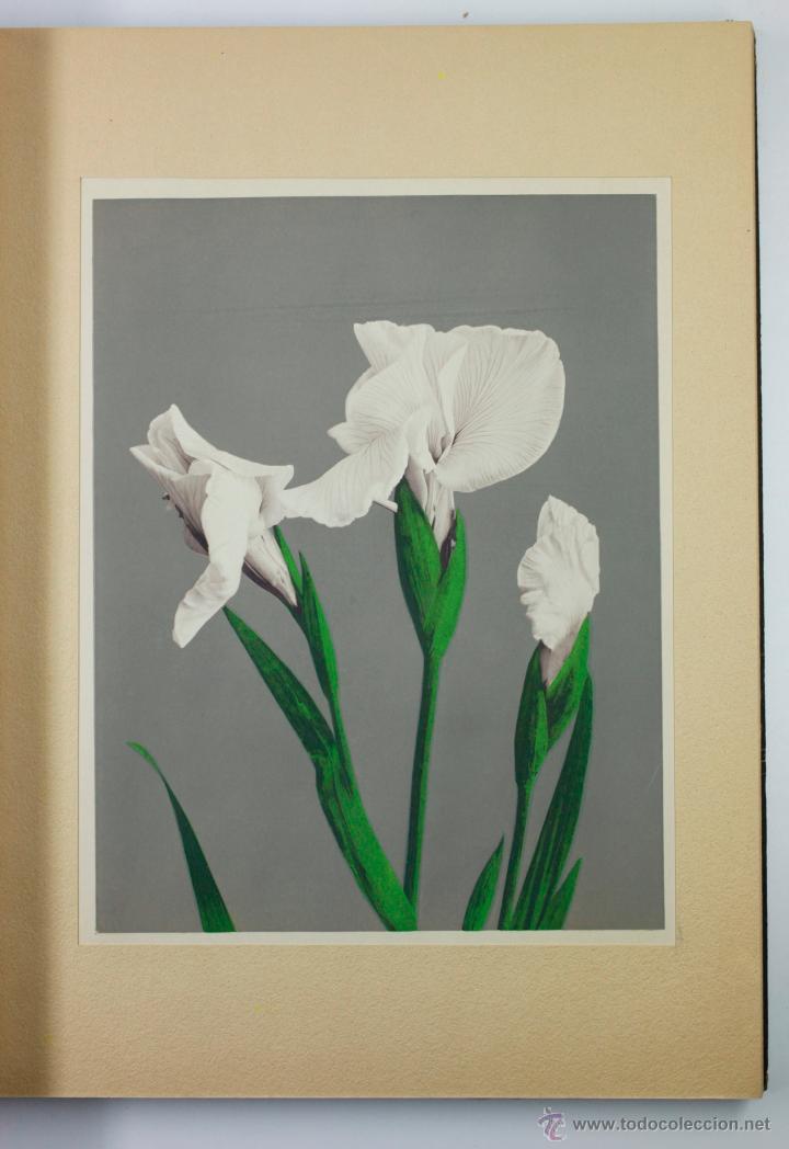 Fotografía antigua: JAPAN,1897-98, BRINKLEY, EDITION DE LUXE. Más de 200 albúminas y 9 collotipos. 9 álbumes. Ver fotos - Foto 59 - 44465154