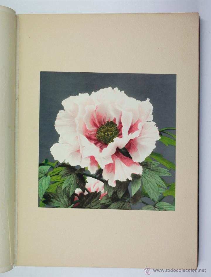 Fotografía antigua: JAPAN,1897-98, BRINKLEY, EDITION DE LUXE. Más de 200 albúminas y 9 collotipos. 9 álbumes. Ver fotos - Foto 79 - 44465154
