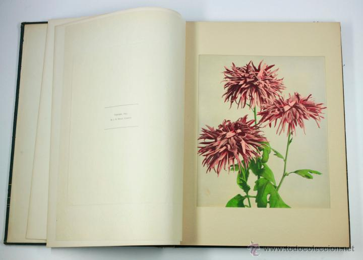 Fotografía antigua: JAPAN,1897-98, BRINKLEY, EDITION DE LUXE. Más de 200 albúminas y 9 collotipos. 9 álbumes. Ver fotos - Foto 91 - 44465154