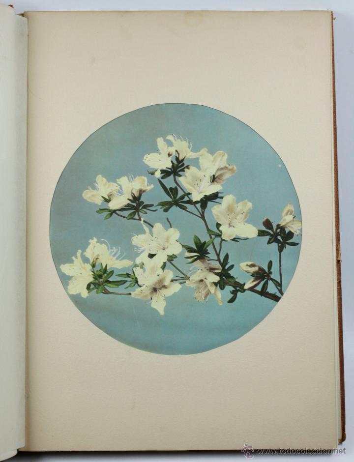 Fotografía antigua: JAPAN,1897-98, BRINKLEY, EDITION DE LUXE. Más de 200 albúminas y 9 collotipos. 9 álbumes. Ver fotos - Foto 108 - 44465154