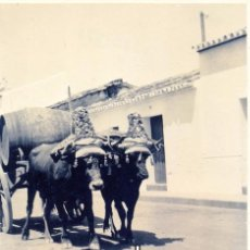 Fotografía antigua: VALVERDE DEL CAMINO, HUELVA,SIGLO XIX, EL CARRO DEL VINO, 80X130MM. Lote 49422277