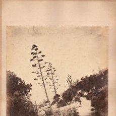 Fotografía antigua: GIBRALTAR, 1860'S. ALBÚMINA 29X25 CM. SIN DATOS DEL FOTÓGRAFO.. Lote 50231565