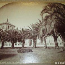 Fotografía antigua: SEVILLA J. LAURENT Y CIA. 1341 PALMERAS DE LOS JARDINES DE SAN TELMO 33X25 CM CIRCA 1870, RARA. Lote 110359011
