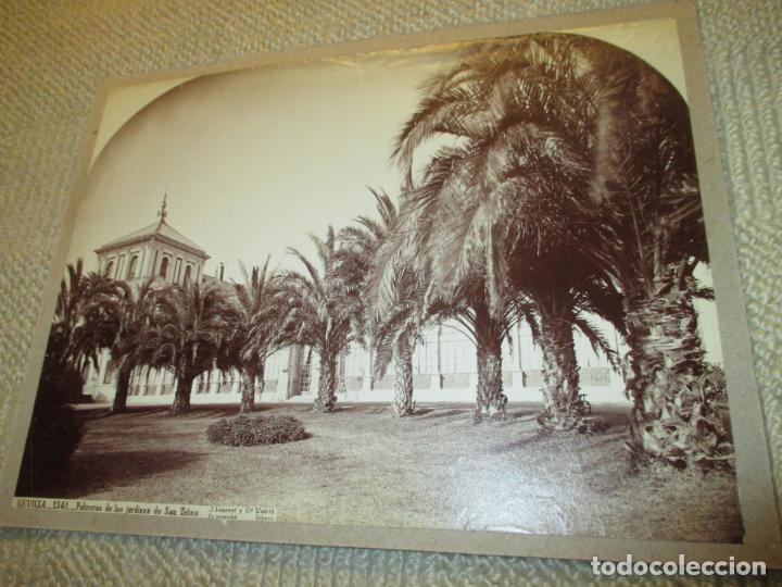 Fotografía antigua: Sevilla J. Laurent y Cia. 1341 Palmeras de los jardines de San Telmo 33x25 cm circa 1870, rara - Foto 4 - 110359011