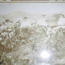 Fotografía antigua: MAGNIFICA FOTOGRAFIA DEL 1904,TRABAJADORES RECOGIENDO LA UVA DE LA VIÑA,FOTOGRAFO JOSE PEREZ MAURAS. Lote 131360238