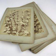 Fotografía antigua: 32 FOTOGRAFÍAS DE FLORES Y PLANTAS. S.XIX , ARMAND GUÉRINET. 27X36 CM.. Lote 132896762