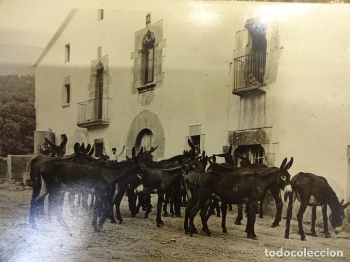 SAN MARTÍN DE CENTELLAS (BARCELONA). INTERESANTE LOTE 6 FOTOS. BURROS O GARAÑONES DE CRÍA. AÑOS 1920 (Fotografía Antigua - Albúmina)
