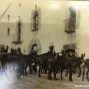 Fotografía antigua: SAN MARTÍN DE CENTELLAS (BARCELONA). INTERESANTE LOTE 6 FOTOS. BURROS O GARAÑONES DE CRÍA. AÑOS 1920. Lote 136036670