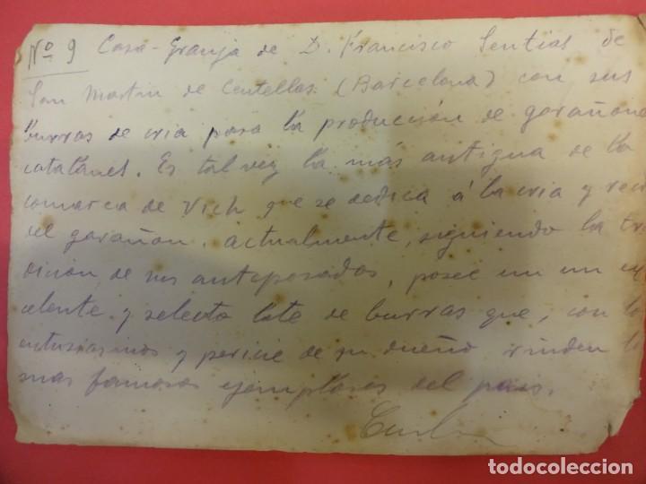 Fotografía antigua: San Martín de CENTELLAS (Barcelona). Interesante lote 6 fotos. Burros o GARAÑONES de cría. Años 1920 - Foto 3 - 136036670