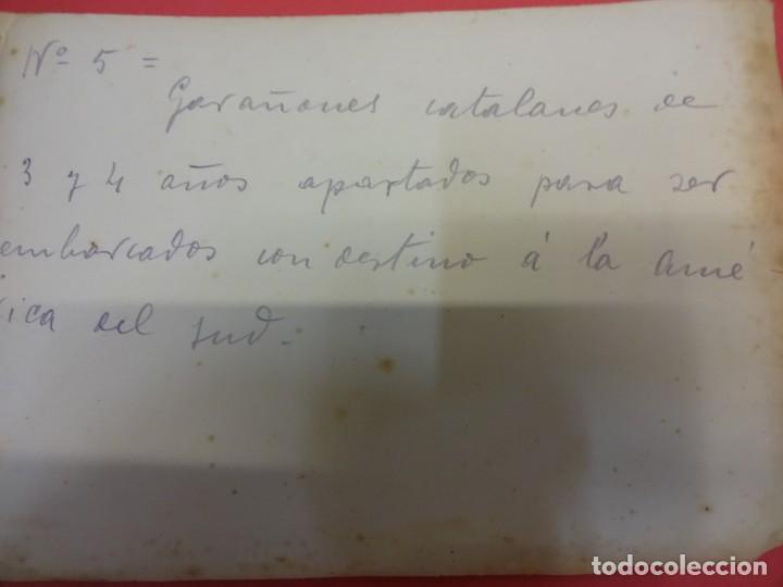 Fotografía antigua: San Martín de CENTELLAS (Barcelona). Interesante lote 6 fotos. Burros o GARAÑONES de cría. Años 1920 - Foto 7 - 136036670