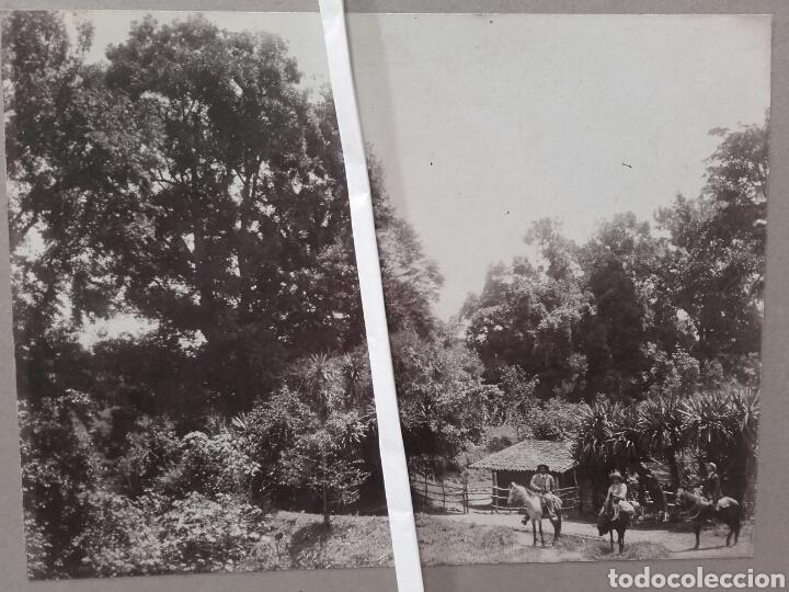 BOSQUES DE VERACRUZ, 1912 (Fotografía Antigua - Albúmina)