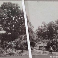 Fotografía antigua: BOSQUES DE VERACRUZ, 1912. Lote 137804438