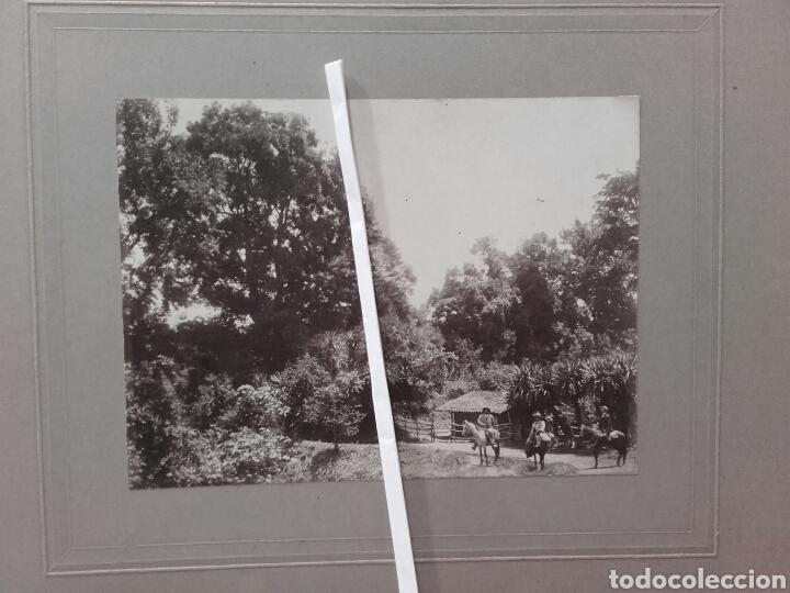 Fotografía antigua: BOSQUES DE VERACRUZ, 1912 - Foto 2 - 137804438