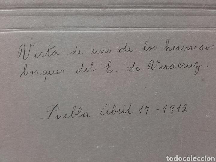 Fotografía antigua: BOSQUES DE VERACRUZ, 1912 - Foto 3 - 137804438