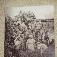 Fotografía antigua: CORDOUE. 609. LES MOISSONNEUSES. (D´APRÈS NATURE). J. LAURENT. MADRID. 25X 32,7 CM CÓRDOBA, MUY RARA. Lote 139439406