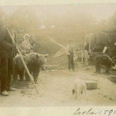 Fotografia antica: ANDALUCÍA GRANADA AZUCARERA DE LACHAR. GITANOS DOMADORES DE OSOS. 1896.. Lote 218439016
