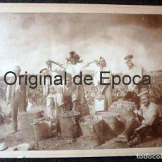 Fotografía antigua: (JX-190288)MAGNIFICA FOTOGRAFÍA DE LA VENDIMIA,VENDIMIADORES,SIGLO XIX O PRINCIPIOS DEL XX.. Lote 151508722
