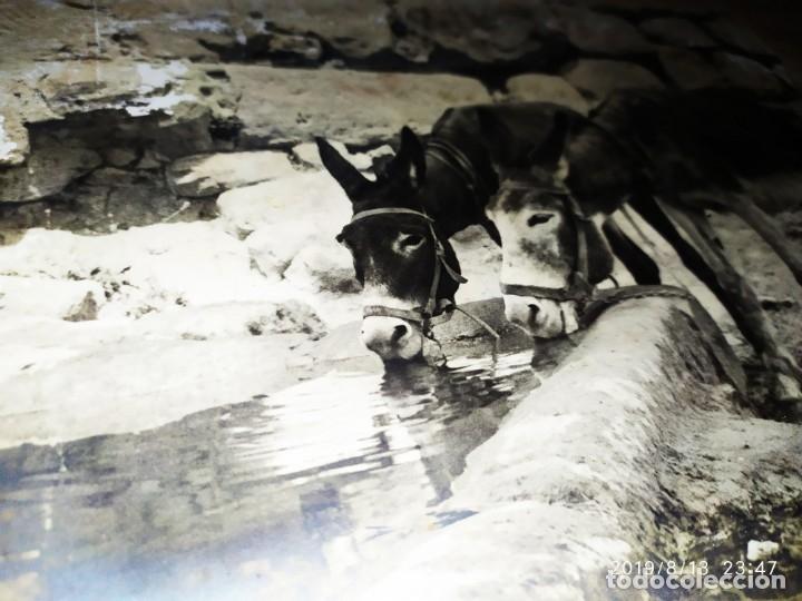 Fotografía antigua: FOTOGRAFÍA BURROS ASNOS ABREVADERO TÍTULO COMPAÑEROS DE FATIGAS BROMURO POR ANTONIO APARISI SOLER - Foto 6 - 173679295