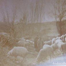 Fotografía antigua: AREVALO AVILA REBAÑO DE OVEJAS CON PASTORES FOTOGRAFIA HACIA 1900 9 X 12 CMTS. Lote 175504774