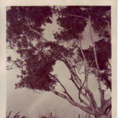 Fotografía antigua: SANTA CRUZ DE TENERIFE BAHIA INTERIOR - JG GRANDE. Lote 194548468