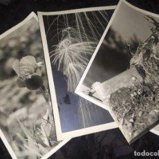 Fotografía antigua: ANTONIO ALBERT GALBIS FUEGOS ARTIFICIALES LOTE 16 FOTOGRAFÍAS AÑOS 60 NATURALEZA ARTISTICAS ÚNICAS. Lote 197145441