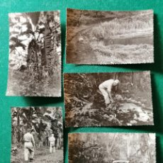 Fotografía antigua: LOTE FOTOS GUINEA ESPAÑOLA. VISITA A LAS PLANTACIONES. Lote 245955115