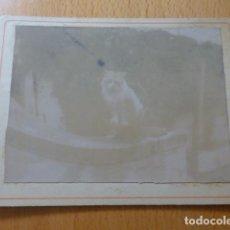 Fotografía antigua: GATO EN JARDIN ALBUMINA MONTADA SOBRE CARTON SIGLO XIX 9,5 X 12,5 CMTS. Lote 277653568