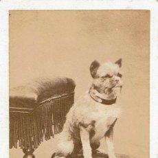 Fotografía antigua: FTO. C.V. RETRATO CANINO. PERRO MASCOTA SOBRE BUTACA. CA.1880-1885. FOT: G.M. LEGÉ . PARIS.. Lote 87081072