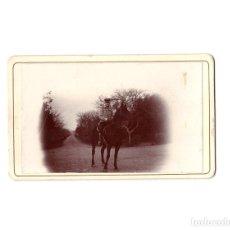 Fotografía antigua: CARTES DE VISITE. ESTUDIO FOTOGRÁFICO. DESCONOCIDO. FOTOGRAFIA MILITAR A CABALLO. HUSAR. Lote 165966186