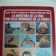Fotografía antigua: LA AVENTURA DE LA VIDA DE FÉLIX RODRÍGUEZ DE LA FUENTE. 1980. LAS 300 MEJORES DIAPOSITIVAS.. Lote 113593942