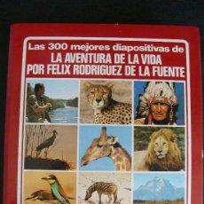 Fotografía antigua: LA AVENTURA DE LA VIDA. FÉLIX RODRÍGUEZ DE LA FUENTE. 1980. 300 DIAPOSITIVAS. INCOMPLETO.. Lote 20327357