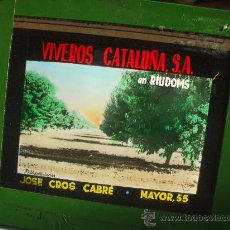 Fotografía antigua: RIUDOMS - PUBLICIDAD VIVEROS CATALUÑA - DIAPOSITIVA DE VIDRIO. Lote 27299502