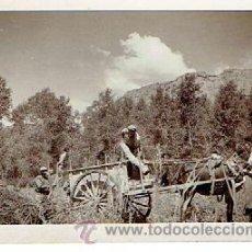 Fotografía antigua: FOTOGRAFIA ANTIGUA OLIANA, MIDE 9,5 X 6,5 CM. Lote 45680585