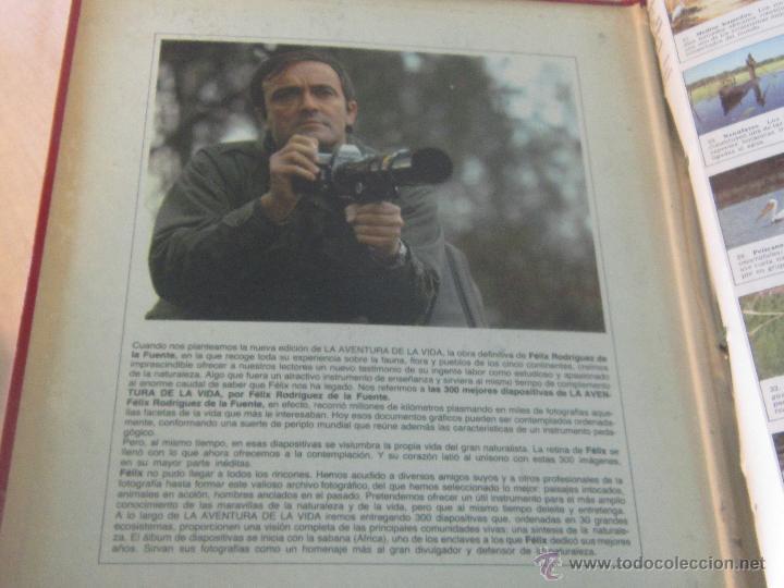 Fotografía antigua: LAS 300 MEJORES DIAPOSITIVAS DE LA AVENTURA DE LA VIDA ( FELIX RODRIGUEZ DE LA FUENTE)- FALTAN 21 - Foto 8 - 46966202