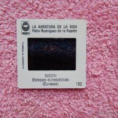 Fotografía antigua: LA AVENTURA DE LA VIDA 192 DIAPOSITIVA FÉLIX RODRÍGUEZ DE LA FUENTE EDICIONES URBION 1980. Lote 50096999