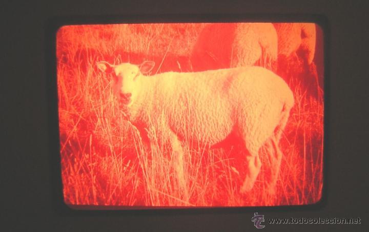 Fotografía antigua: LOTE DE 103 DIAPOSITIVAS EL PRINCIPITO - 2 CAPITULOS 103 FOTOGRAMAS - CLARET - GALLIMARD 1946 - Foto 7 - 52879396