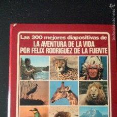 Fotografía antigua: LAS 300 MEJORES DIAPOSITIVAS DE LA AVENTURA DE LA VIDA ( FELIX RODRIGUEZ DE LA FUENTE),. Lote 58203703