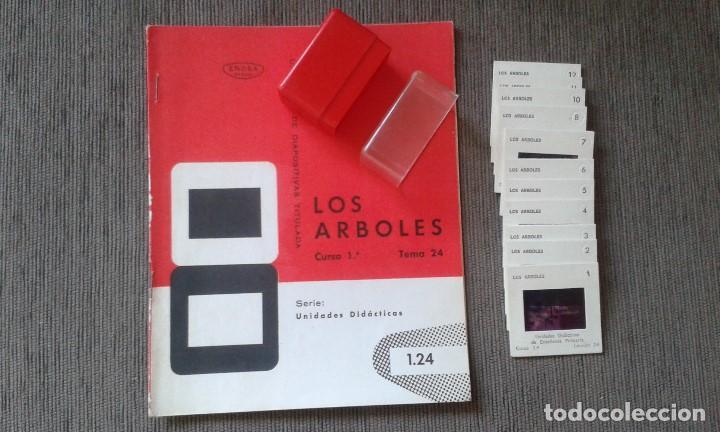 12 DIAPOSITIVAS Y LIBRETO - TEMÁTICA LOS ÁRBOLES - CON ILUSTRACIONES DE ÉPOCA - 1967 (Fotografía Antigua - Diapositivas)