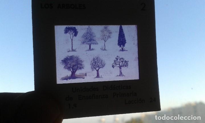 Fotografía antigua: 12 diapositivas y libreto - Temática Los Árboles - Con ilustraciones de época - 1967 - Foto 2 - 66282810