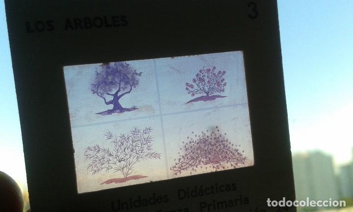 Fotografía antigua: 12 diapositivas y libreto - Temática Los Árboles - Con ilustraciones de época - 1967 - Foto 3 - 66282810
