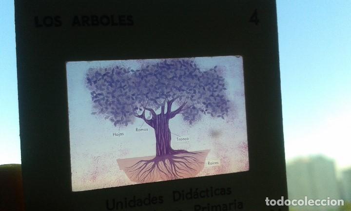 Fotografía antigua: 12 diapositivas y libreto - Temática Los Árboles - Con ilustraciones de época - 1967 - Foto 4 - 66282810