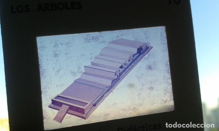 Fotografía antigua: 12 diapositivas y libreto - Temática Los Árboles - Con ilustraciones de época - 1967 - Foto 5 - 66282810