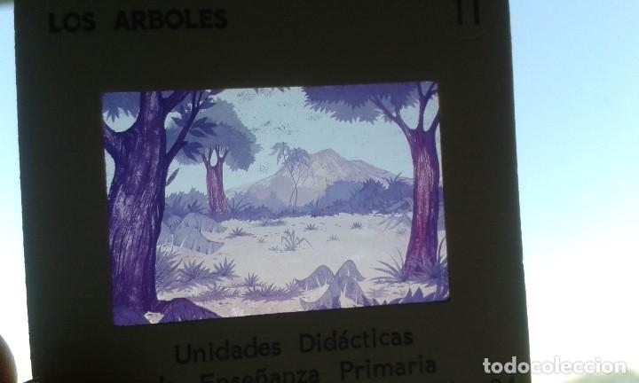 Fotografía antigua: 12 diapositivas y libreto - Temática Los Árboles - Con ilustraciones de época - 1967 - Foto 6 - 66282810
