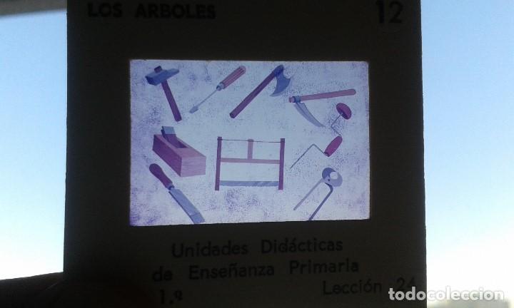 Fotografía antigua: 12 diapositivas y libreto - Temática Los Árboles - Con ilustraciones de época - 1967 - Foto 7 - 66282810