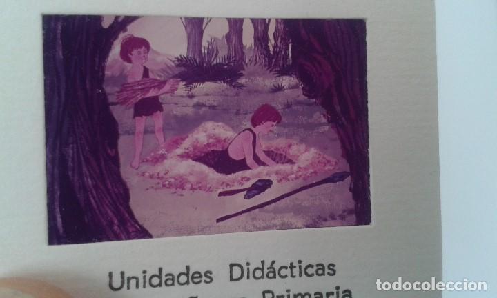 Fotografía antigua: 16 diapositivas y libreto - LA VIDA DEL HOMBRE PRIMITIVO - ilustraciones de época, 1967 - Ver fotos - Foto 5 - 66486374